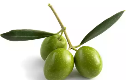 Picture of Green Olives (Jolpai) 500 gm
