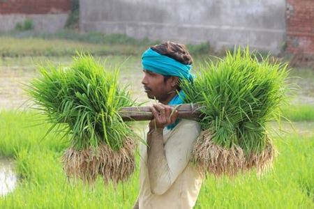 Picture for category Online Agro
