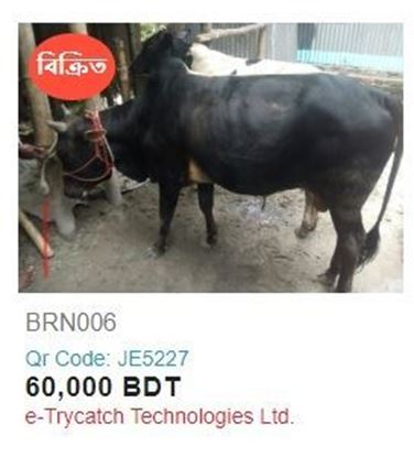 Picture of Deshal Cow - 023